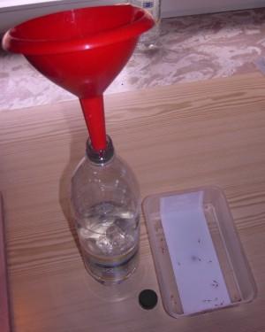 Einfüllen der Garnelen in die Transportflasche